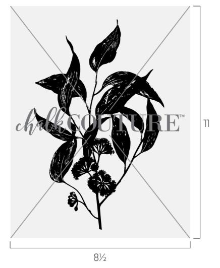 eucalyptus transfer